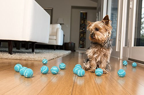 iFetch-Too-Interactive-Ball-Launcher-for-Dogs-launch-product-demo with terrier