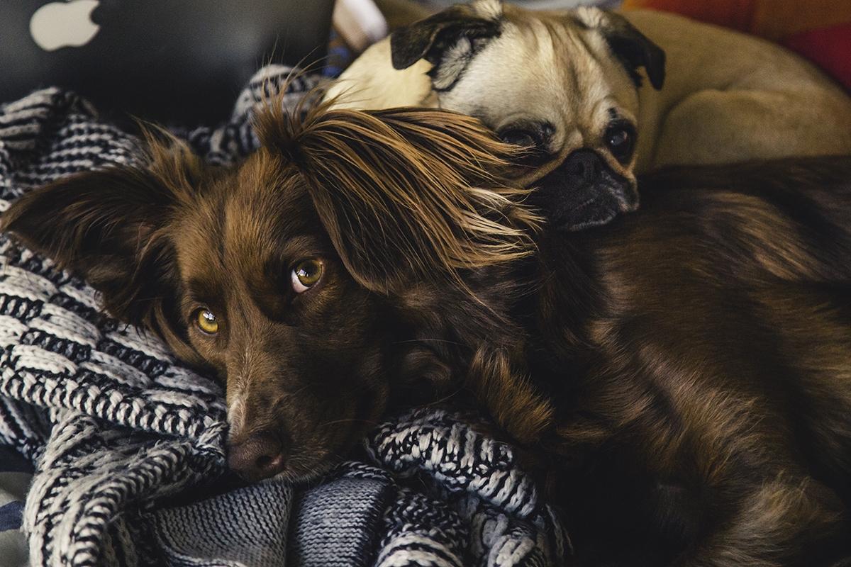 Cute-dog-lounging
