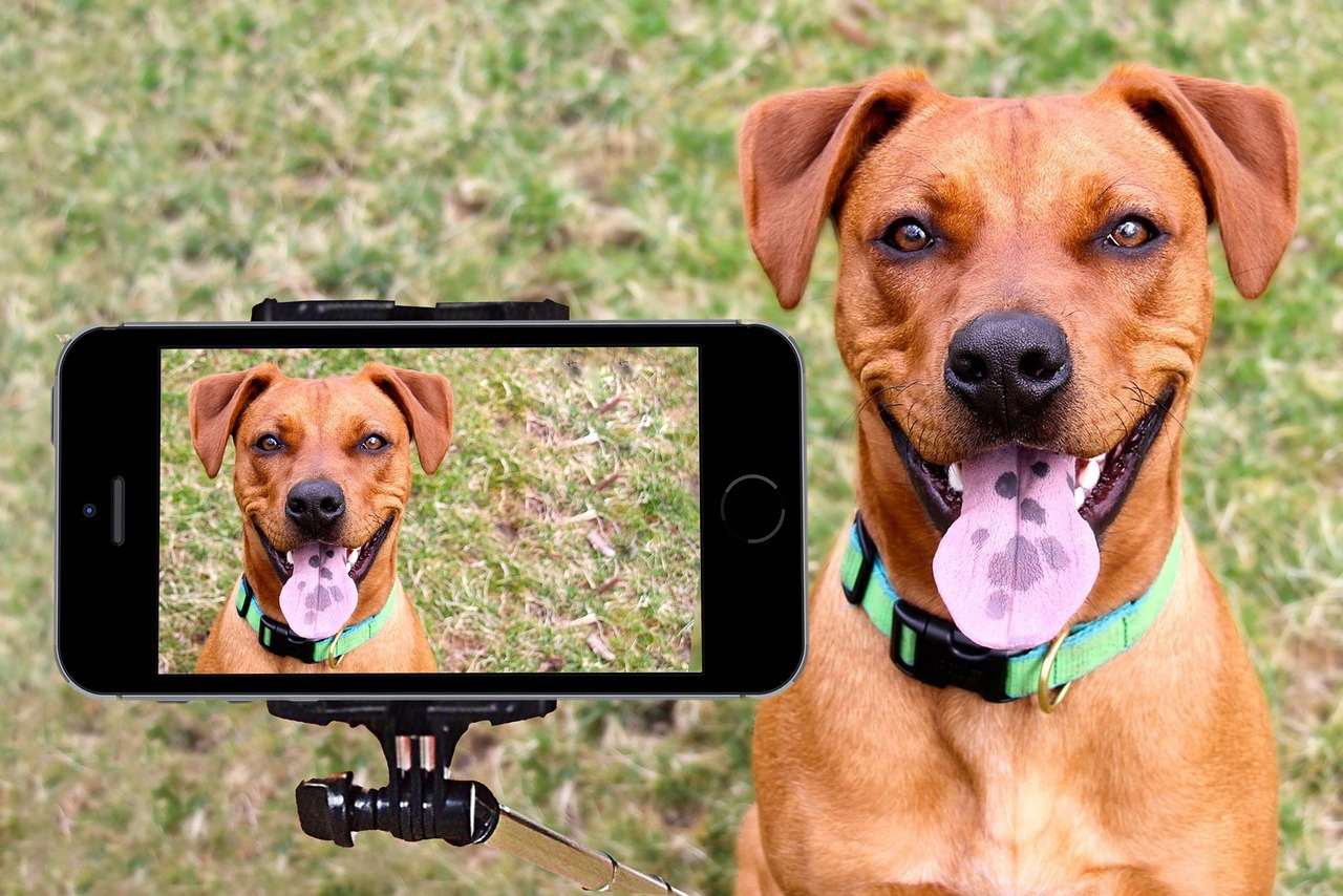 Dog-selfie