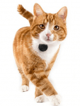 TabCat-Pet-Tracking-Collar-Cat-Locator-Lite-Cat-Finder-Tracker-System
