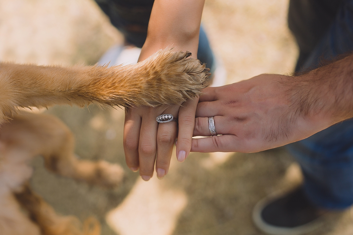 hands-and-paws