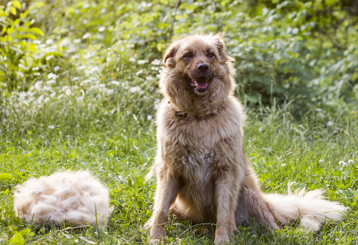 4-Spring-Tips-To-Get-Your-Dog-ready-for