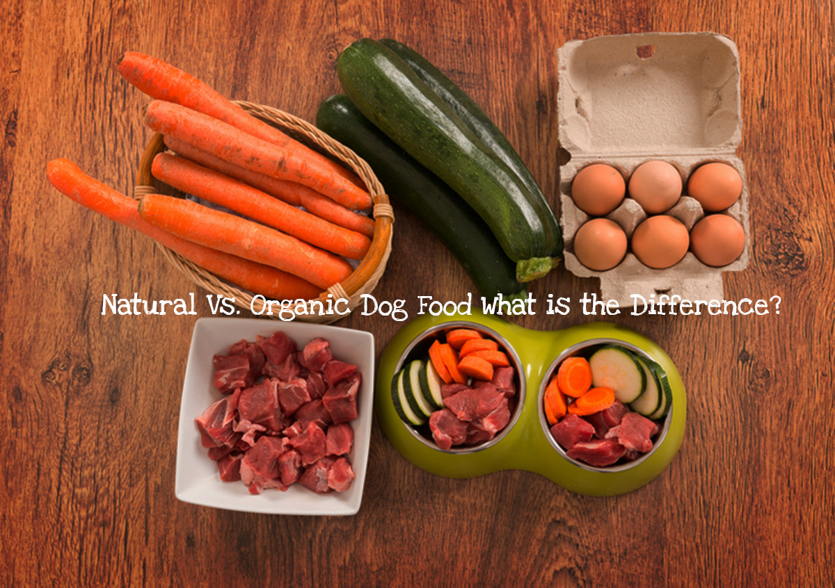 Natural-Vs.-Organic-Dog-Food-What-is-the-Difference