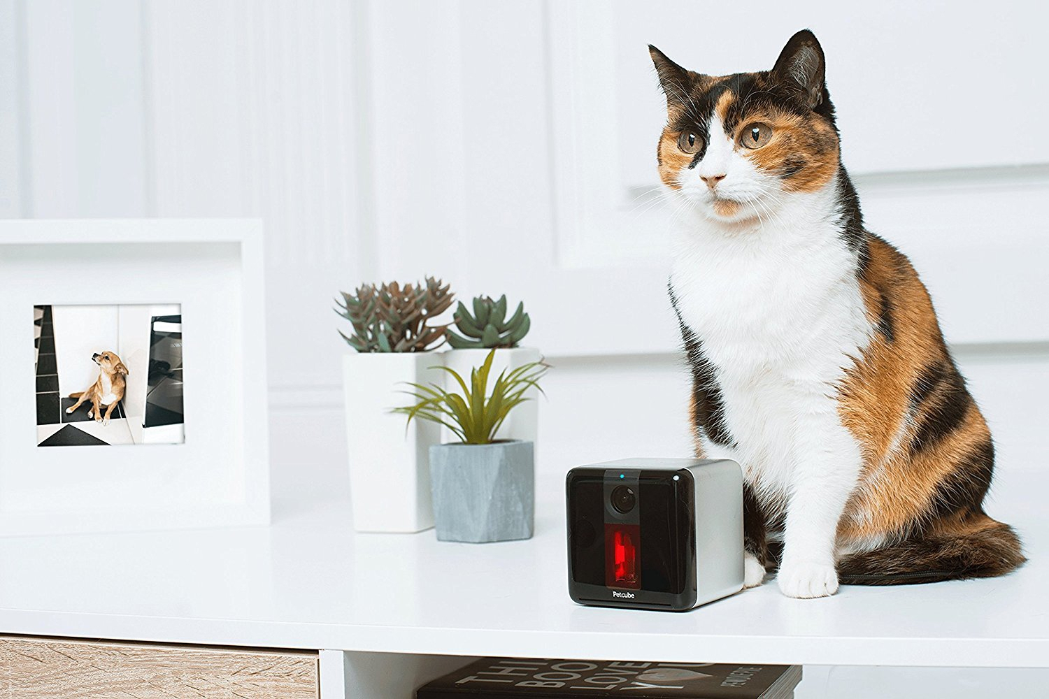 Petcube-Play-Interactive-Wi-Fi-Pet-Camera-in-home-demo-with-cat