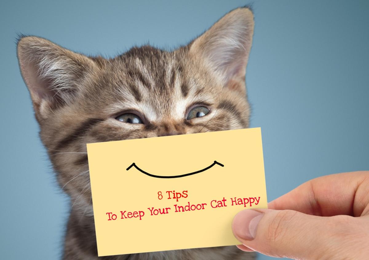 8-Tips-to-Keep-Your-Indoor-Cat-Happy