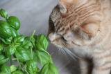 10 Plants That Can Poison Cats You Should Know