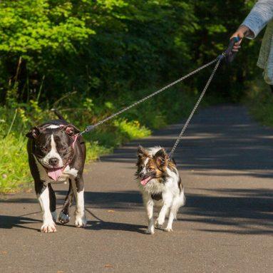 Wigzi Dual Doggie 2 Dog Retractable Leash